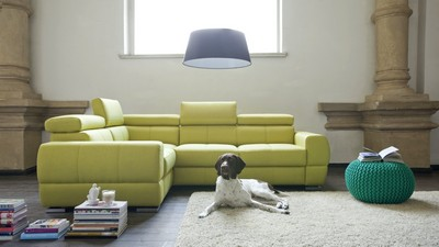 dog, design, interior, style, living room, room
